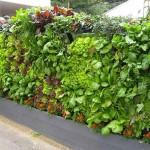 Fantásticas mini hortas verticais. Cria a tua própria horta vertical