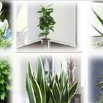 Tenha pelo menos uma destas plantas em casa para melhor a qualidade do ar da sua casa