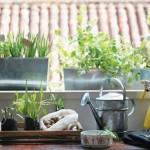 Como ter uma mini horta na sua cozinha. Vai ter sempre produtos frescos