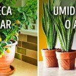 10 Plantas para ter um clima perfeito dentro de casa!