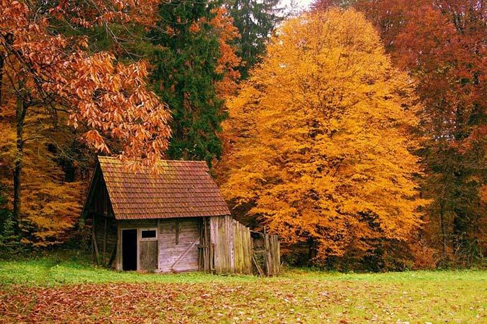 casa_floresta3