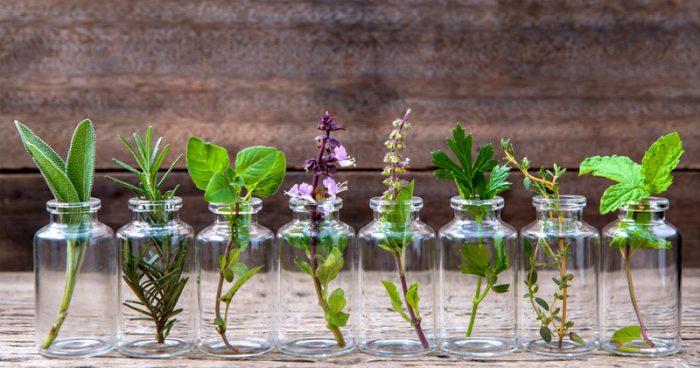 cultivar_em_agua