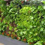 Mini-Hortas Verticais. Aprende a criar a sua própria horta vertical!