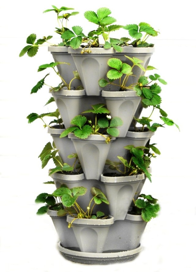 Ideias de g nio para cultivar vegetais em formato jardim for Vegetable garden designs south africa