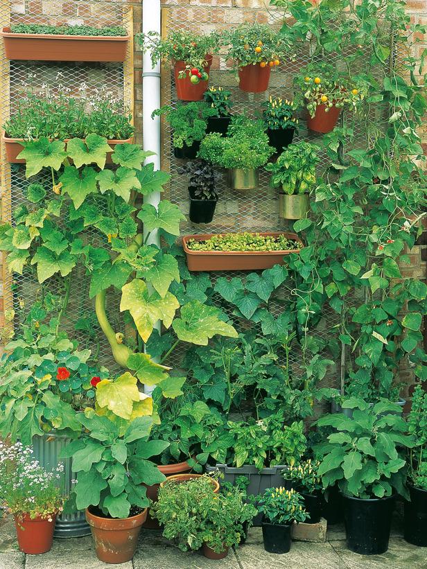 Ideias De G Nio Para Cultivar Vegetais Em Formato Jardim Vertical
